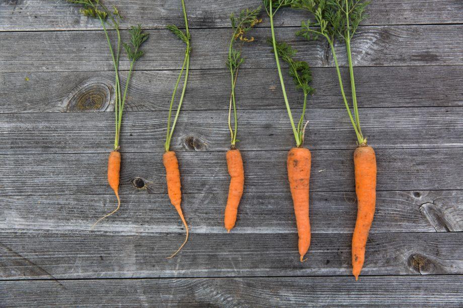 Karotten, Möhren & Wurzelgemüse