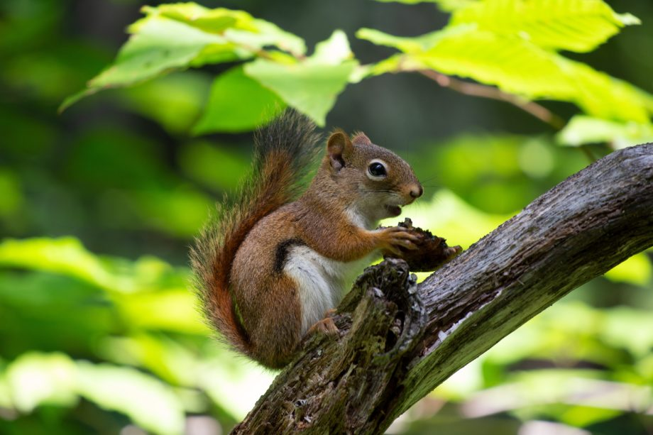 Kleine Eichhörnchen & alte Helden