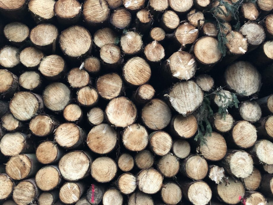 Qualen, Quallen & jede Menge Holz