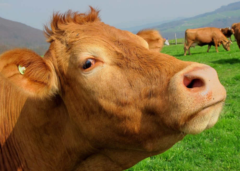 Beef auf allen Ebenen