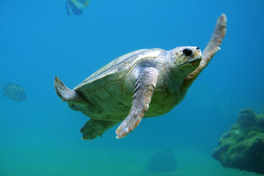 Schildkrötendefizit
